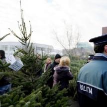 ACȚIUNE a POLIȚIEI în VÂLCEA. Pomi de Crăciun confiscați și amenzi aplicate
