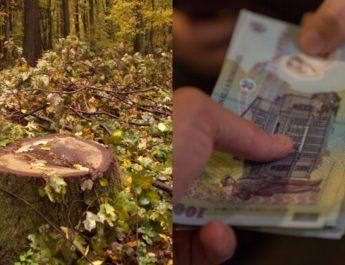 CORUPȚIE la VÂLCEA. Un pădurar a luat șpagă 200 de lei pentru a lăsa hoții de lemne să taie arbori
